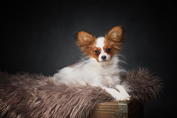 Photograph of Dog in Studio